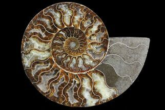 "Buy 8.4"" Polished Ammonite Fossil (Half) - Agatized - #67900"