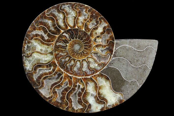 "8.4"" Polished Ammonite Fossil (Half) - Agatized"