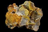 "1.3"" Wulfenite Crystals on Matrix - Mexico - #67702-1"