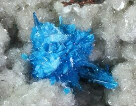 Cavansite on Stilbite - Fossils For Sale - #67788