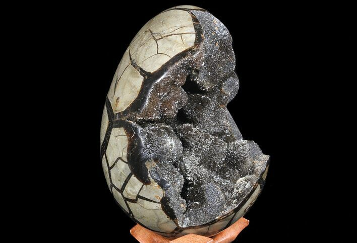 "7.8"" Septarian ""Dragon Egg"" Geode - Black Crystals"