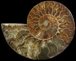 "4.2"" Cut Ammonite Fossil (Half) - Agatized For Sale, #69035"