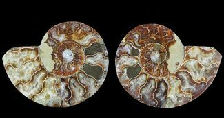 "Bargain, 4.5"" Cut & Polished Ammonite Pair - Agatized For Sale, #69023"