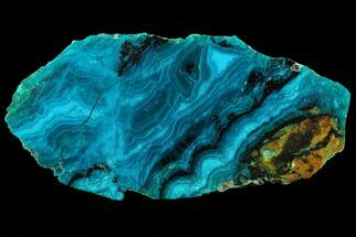 "Buy 2.4"" Polished Chrysocolla & Plume Malachite - Bagdad Mine, Arizona - #69514"