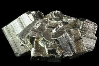 Pyrite - Fossils For Sale - #69588