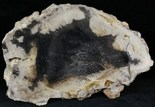 "7.7"" Petrified Wood Slab -  Sweethome, Oregon (Reduced Price) For Sale, #25853"