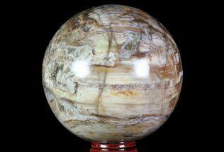"3.4"" Colorful Petrified Wood Sphere - Madagascar For Sale, #71405"