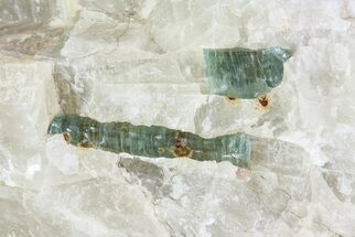 Fluorapatite & Calcite - Fossils For Sale - #71628