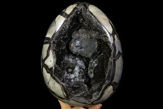 "Bargain, 8.4"" Septarian ""Dragon Egg"" Geode - Black Crystals For Sale, #71837"