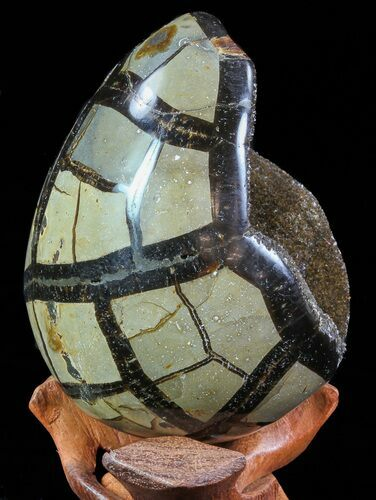"4.6"" Septarian ""Dragon Egg"" Geode - Black Crystals"