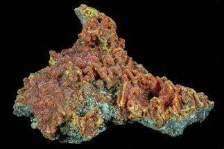"2.7"" Botryoidal Red-Orange Orpiment - Peru For Sale, #70508"