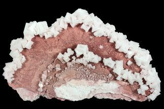 "Buy 13.3"" Pink Halite Crystal Plate - Trona, California - #72280"