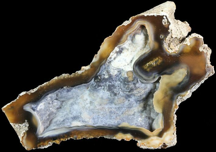 "4.2"" Unique, Agatized Fossil Coral Geode - Florida"