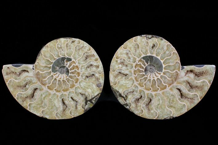 "5"" Cut & Polished Ammonite Pair - Agatized"