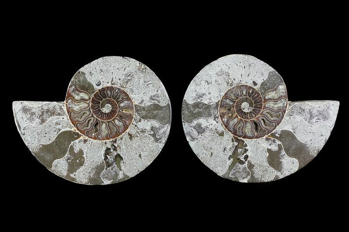 "Bargain, 6"" Cut & Polished Ammonite Pair"