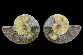 "Buy Bargain, 5.5"" Cut & Polished Ammonite Pair - Agatized - #73960"