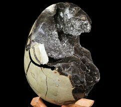 Septarian with Calcite  - Fossils For Sale - #73782