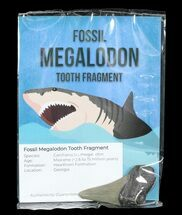 "Real Fossil Megalodon Partial Tooth - 3"" Size For Sale, #75578"