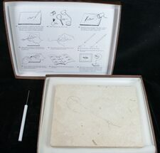 Prepare Your Own Fossil Fish Kit - Grade B For Sale, #75734