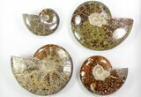 Wholesale Lot: 25 Lbs Beautiful Polished Ammonites - 18 Pieces - #76996-2