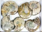 "Wholesale: 6 to 7"" Cut Ammonite Pairs (Grade B/C) - 6 Pairs - #77332-2"