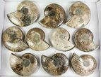 "Wholesale: 4 - 5"" Cut Ammonite Pairs (Grade B) - 10 Pairs - #77338-1"