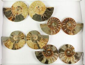 "Buy Wholesale: 4 - 5"" Cut Ammonite Pairs (Grade B) - 10 Pairs - #77338"