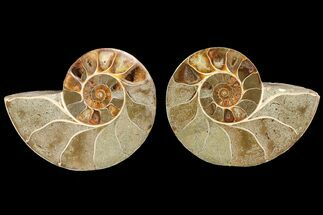 "Buy 4.1"" Cut & Polished Ammonite (Anapuzosia?) Pair - Madagascar - #77410"