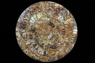 "Buy 12.2"" Composite Plate Of Agatized Ammonite Fossils - #77788"
