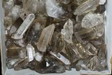 "Wholesale Lot: 18 Lbs Smoky Quartz Crystals (2-4"") - Brazil - #77823-2"