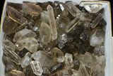 "Wholesale Lot: 23 Lbs Smoky Quartz Crystals (2-4"") - Brazil - #77825-1"