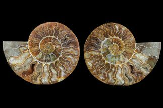 "4.4"" Cut & Polished Ammonite Pair - Agatized For Sale, #78557"