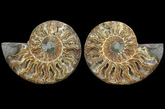 "Buy 4.5"" Cut & Polished Ammonite Pair - Crystal Lined Chambers - #78559"