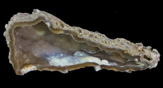 "3.6"" Unique, Agatized Fossil Coral Geode - Florida For Sale, #66851"