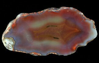 Quartz var. Agate - Fossils For Sale - #79518