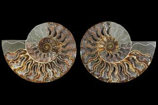 "6.5"" Cut/Polished Ammonite Pair - Crystal Fill Chambers For Sale, #79151"