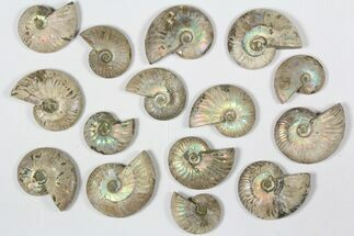 Various - Fossils For Sale - #79440