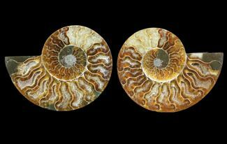"Buy 3.6"" Cut & Polished Ammonite Pair - Agatized - #78394"
