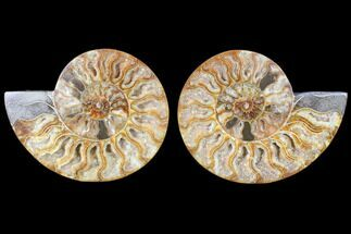"5.6"" Cut & Polished Ammonite Fossil - Agatized For Sale, #79703"