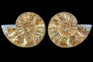 "Buy 5.6"" Cut & Polished Ammonite Pair - Agatized - #79705"