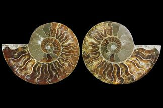 "3.1"" Cut & Polished Ammonite Pair - Agatized For Sale, #78371"