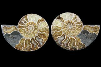 "Buy 5"" Cut & Polished Ammonite Pair - Agatized - #79711"