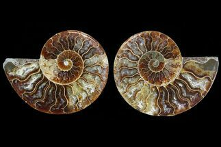 "3.25"" Cut & Polished Ammonite Pair - Agatized For Sale, #78380"