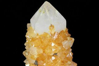 "Buy 3"" Sunshine Cactus Quartz Crystal - South Africa - #80182"