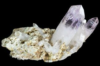 "1.7"" Amethyst Cluster - Las Vigas, Mexico For Sale, #80585"