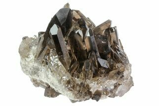 "Buy 4.5"" Dark Smoky Quartz Crystal Cluster - Brazil - #80179"