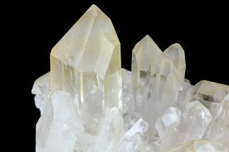 "Buy 2.7"" Quartz Crystal Cluster - Brazil - #81007"
