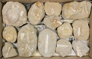 Various - Fossils For Sale - #81324