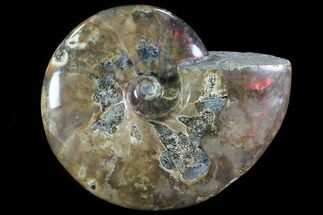 "Buy 5.15"" Iridescent Red Flash Ammonite - Madagascar - #81379"