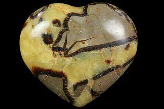 Septarian - Fossils For Sale - #82002
